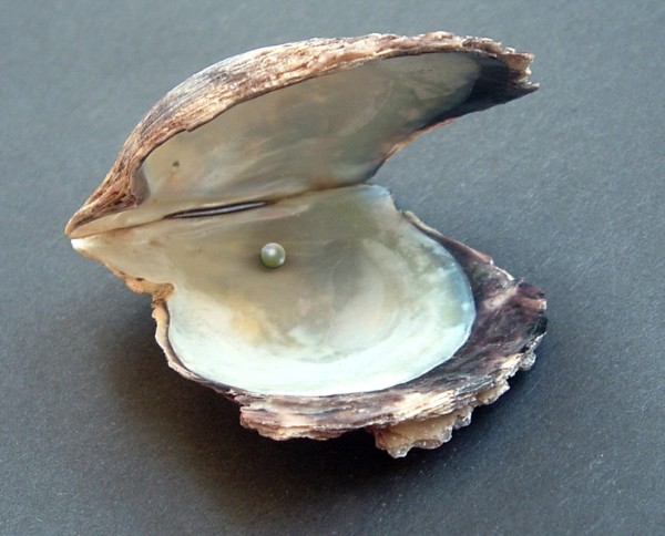 Newly found Oyster has lots of pearls – YA Chit Chat